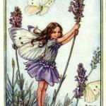 Lavender-Flower-Fairy